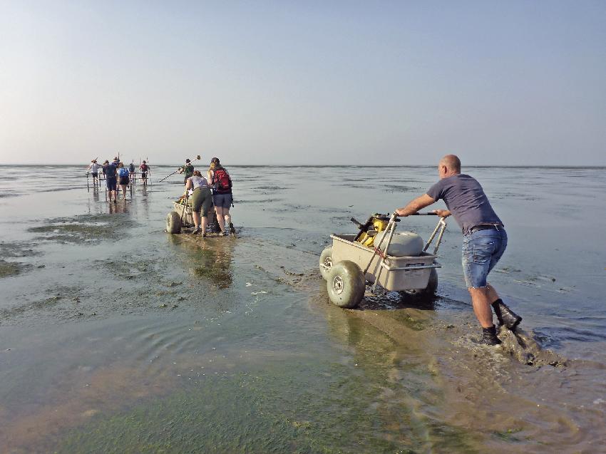Auf dem acht Kilometer langen Fußweg zum Rungholtgebiet müssen täglich umfangreiche Mess- und Arbeitsgeräte händisch transportiert werden (Foto: Ruth Blankenfeldt).