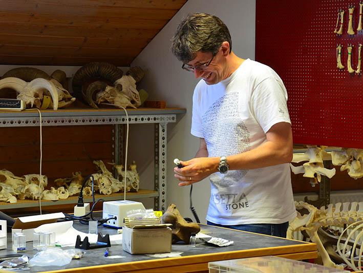 Dr. John Meadows bereitet Knochenpulver für naturwissenschaftliche Untersuchungen vor.